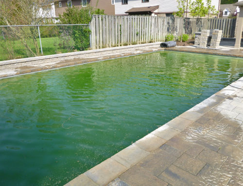 Dealing with Stubborn Algae? What to Do.